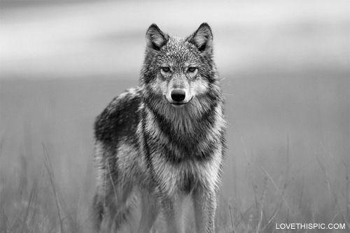 Lone Wolf animals