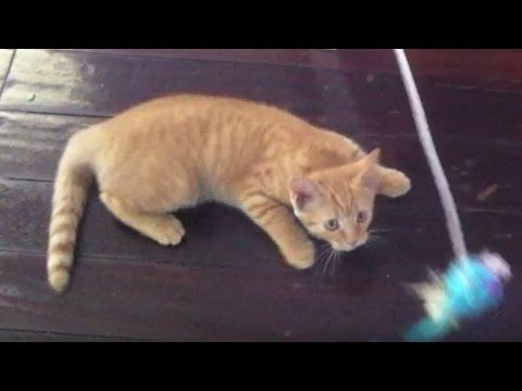 Kitten Compilation - Funny and Cute Ginger Kitten - 2016 #Kitten #Compilation #Video #cutekitten #HopeCats #TheGingerNinja
