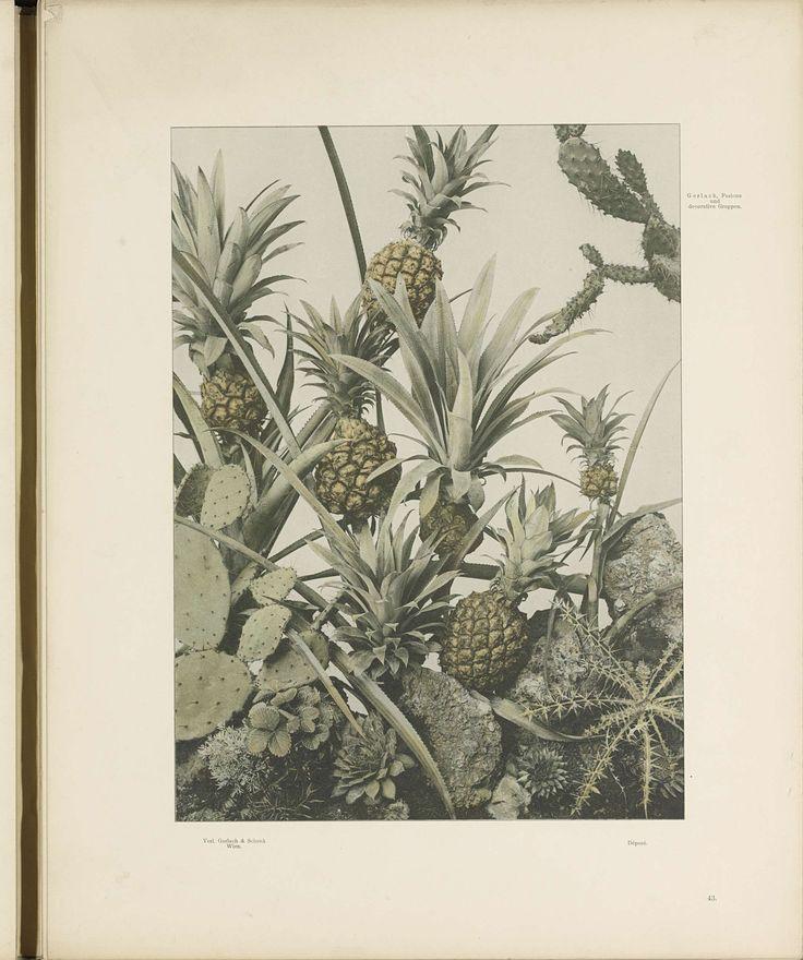 Decoratieve groep met ananassen, cactussen en distels, anonymous, c. 1887 - in or before 1897