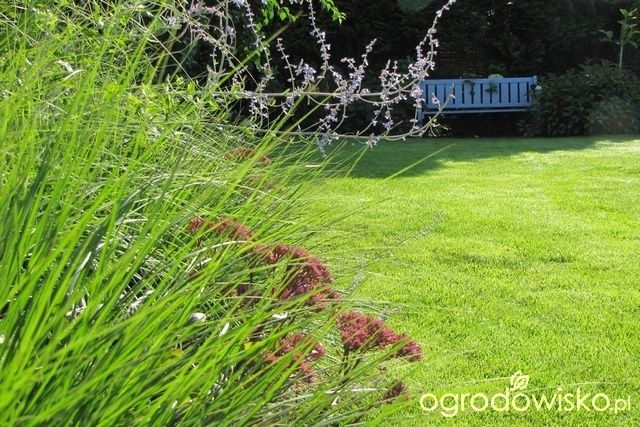 Pokażę nasz ogród - strona 294 - Forum ogrodnicze - Ogrodowisko