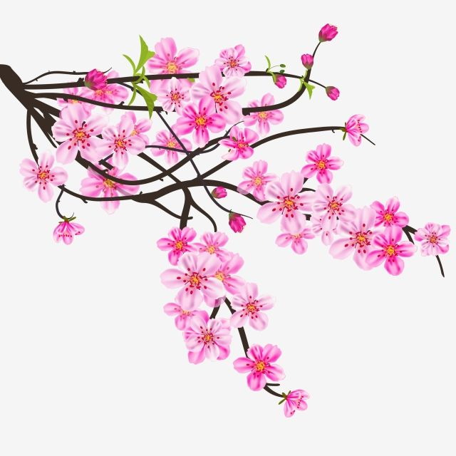 Watercolor Sakura Frame Background With Blossom Cherry Tree Branches Sakura Blossom Hand Drawn Png And Vector With Transparent Background For Free Download Cherry Blossom Art How To Draw Hands Cherry Blossom