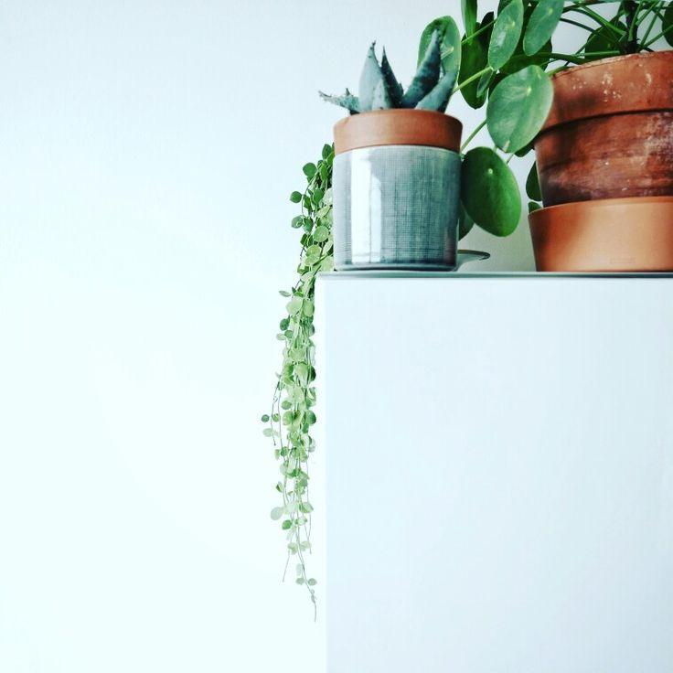 Nos plantes filtrent l'air de notre appartement naturellement.