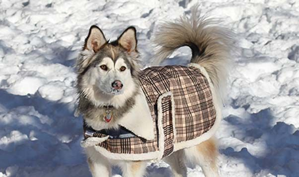THE ASPEN (BLS1595) Cozy and chic with unique pop collar and comfy fleece lining. Traditional plaid pattern ensures your canine will step out in style this winter. Designed for warmth, durability and fashion.