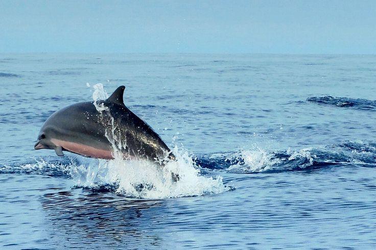 #fujix20 #dolphin #lampung #kiluan
