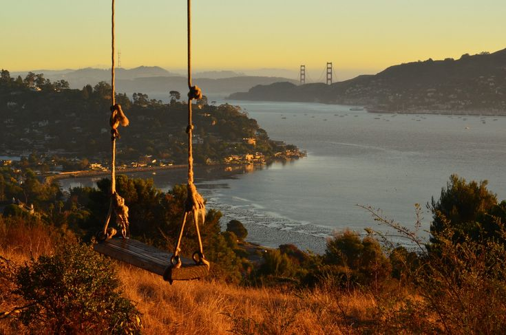 The Hippie Tree in Tiburon, CA. Located off of Gilmartin Drive, on public land owned by the Town of Tiburon, sits an old, giant Eucalyptus tree with a rope swing and amazing views.