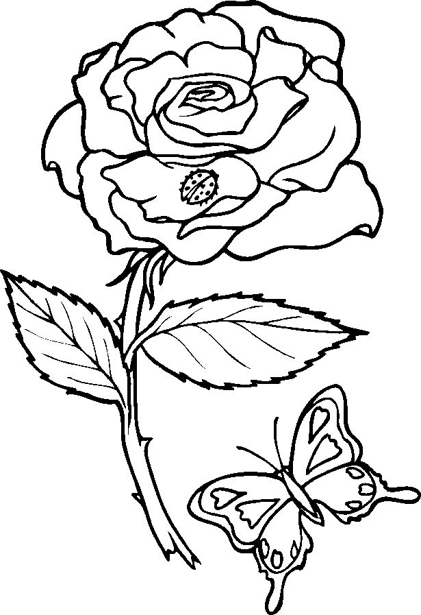 coloring sheets of roses - Timiz.conceptzmusic.co