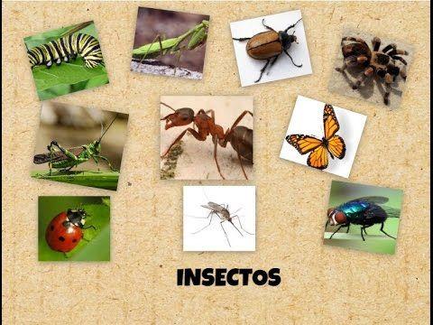 Este video educativo, es para que los niños puedan visualizar los insectos y nombrarlos, reconociendolos con imagenes reales, de los mismos.