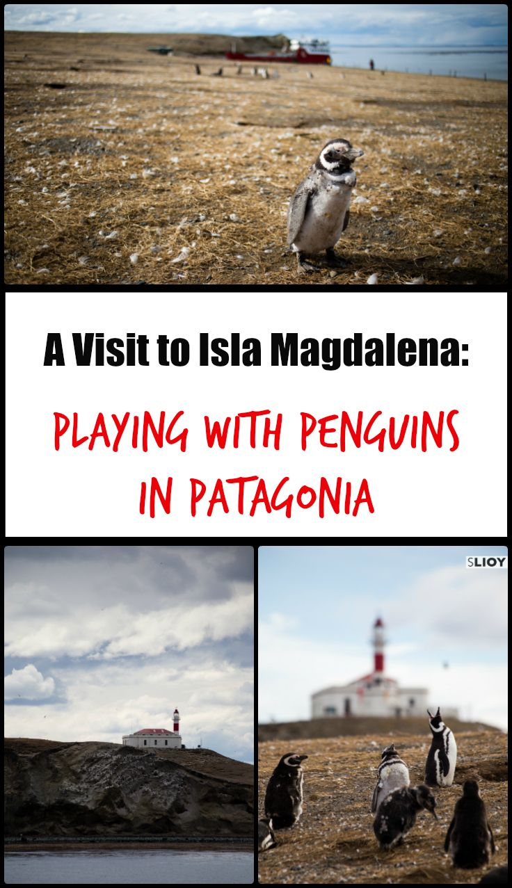 A Visit to Isla Magdalena - Playing with Penguins in Patagonia.
