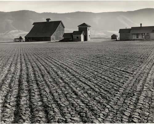 Minor White - Harrowed Field, Union, Oregon - 1941 - Gelatin silver print