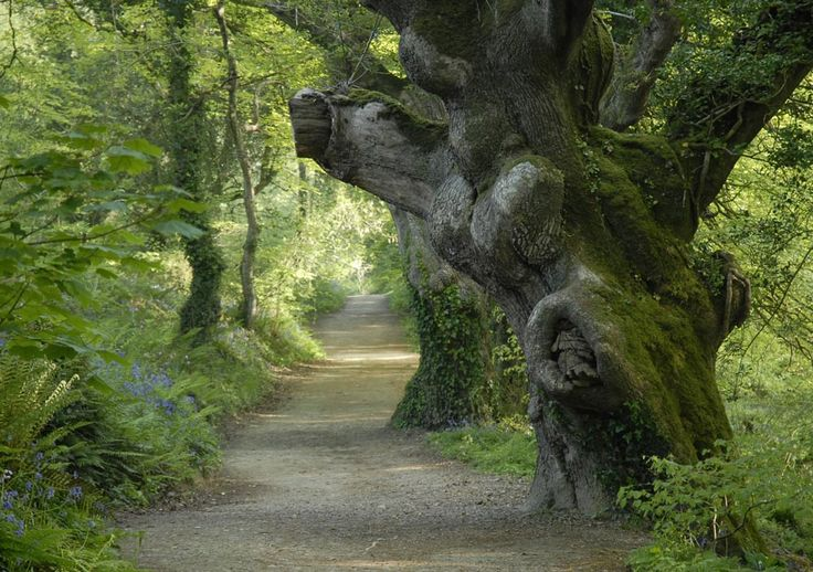 The Lost Valley, Heligan Gardens, Cornwall England
