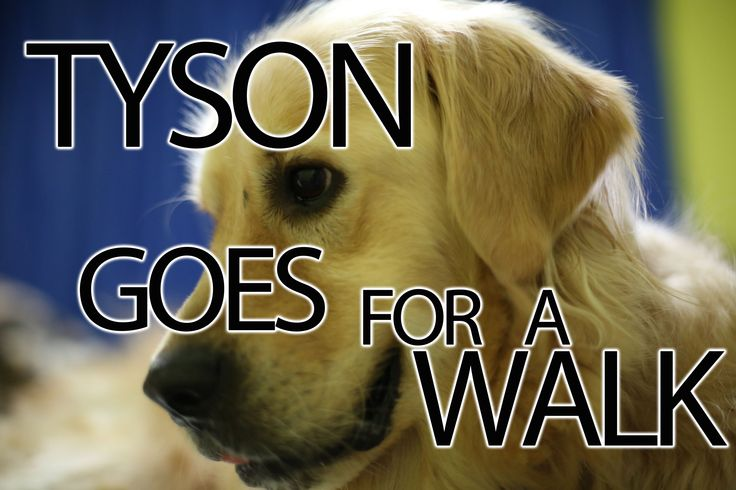 A video about my dog Tyson going for a walk.