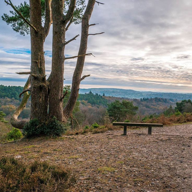 For the most part the southeast of England is either pretty flat or gently rolling hills there is however part where the the hills climb a little higher than most and stunning little valleys can be found the Surrey hills and here on Hindhead common some of the best valleys in the area can be found.  @nationaltrust --------------------------------- @lumix #lumixg80 @lumixuk --------------------------------- #like #follow #share  #photography #photographer #photooftheday #picoftheday #photo…