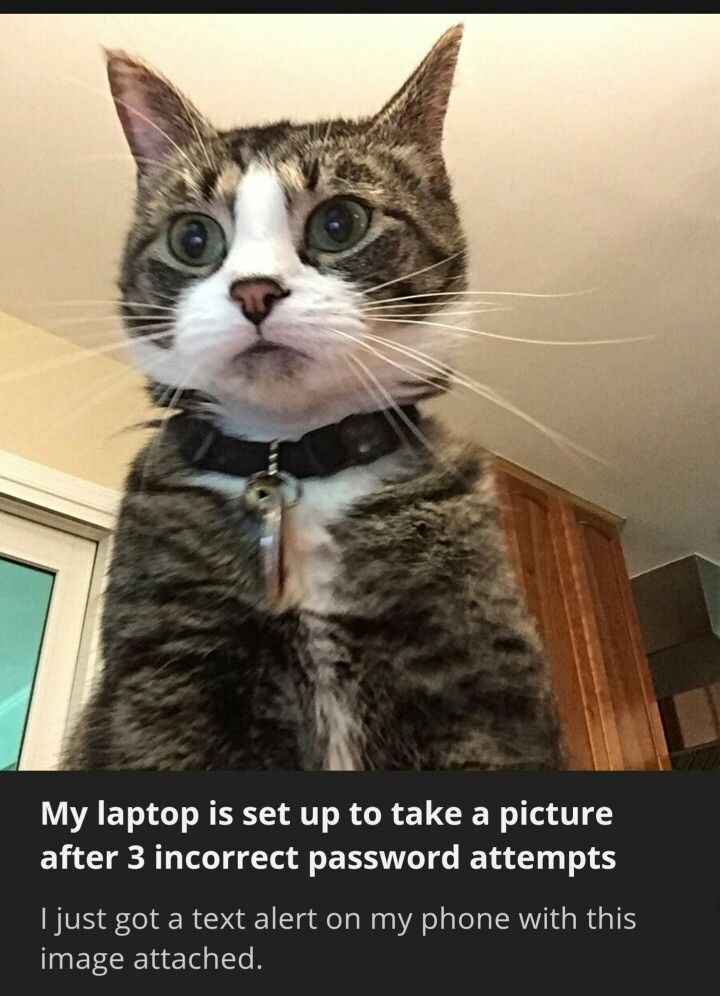 Cats: not known for hacking.