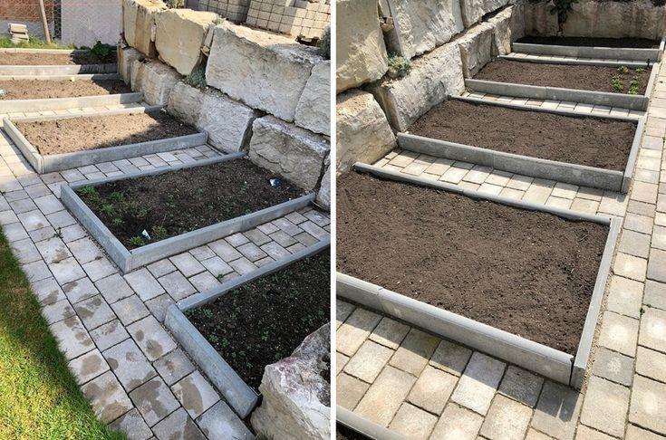 Schaffen, pflanzen und kultivieren Sie Gemüsebeete im Garten