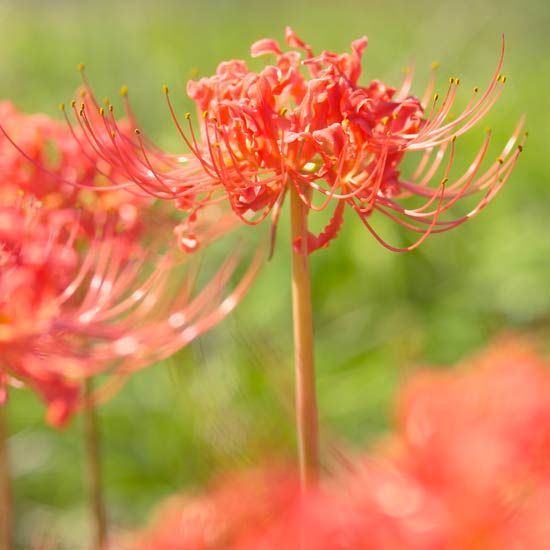 Top fall flowers for your garden - Fall blooming flowers ...