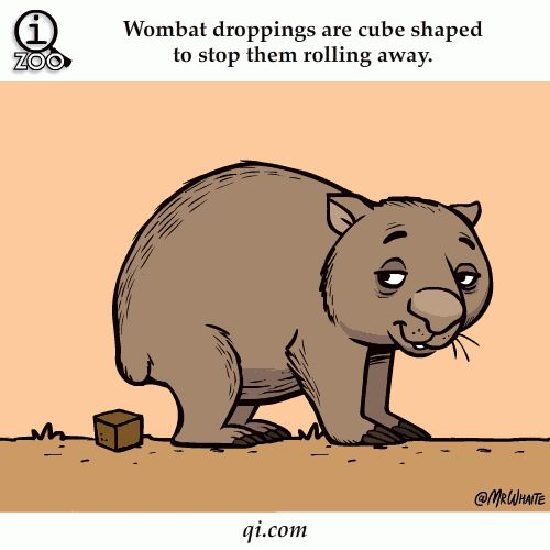 Animal Facts in Funny Animations lol had to Pin ....Jadyn's favorite animal and her favorite fact.