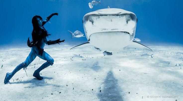 Hannah Fraser es una modelo subacuática (sí, ¡existe realmente ese trabajo!), pero también es una dedicada conservacionista. Después de las acciones del Gobierno de Australia Occidental contra los tiburones tigre (matarlos en masa debido a algunos ataques al azar en las playas), Hannah decidió llevar a cabo una de las actuaciones más impresionantes que he visto en mi vida!