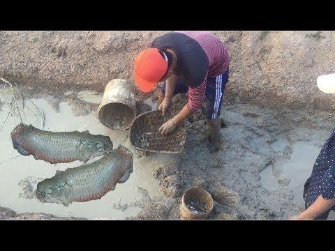 Wow! Amazing Cambodia Catch Net Fishing - Net Fishing At Pailin Province...