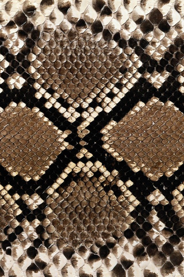 Nature's Art:  Snake Skin | The House of Beccaria