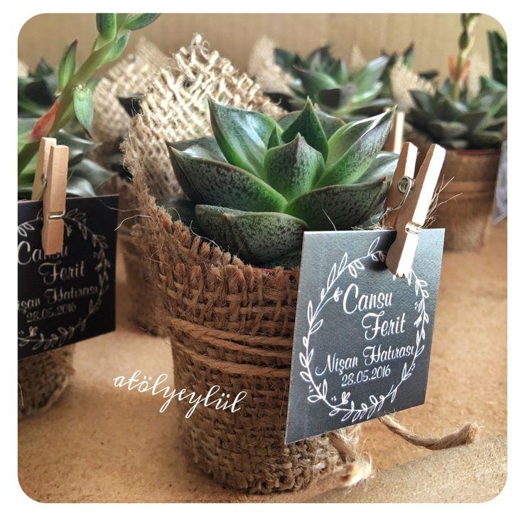 Mini sukulent, mini succulent, kaktüs, cactus, wedding favors, nikah şekeri, nikah hediyesi, babyshower gifts, christmas, valentines day, terrarium, teraryum, babyshower, sevgililer günü, birtday gifts, custom party, consept party, custom made, Handmade gifts, diş buğdayı ~ by Atolyeylul