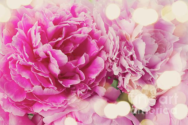 Bouquet of fresh pink peonies close up, retro toned by Anastasy Yarmolovich #flowers #AnastasyYarmolovichFineArtPhotography #pink