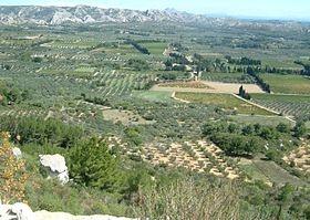 Olives cassées de la vallée des Baux-de-Provence AOC