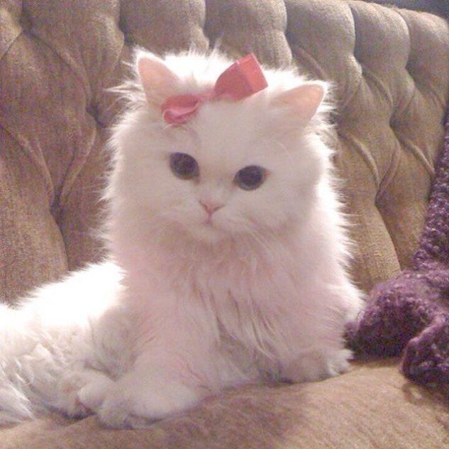 Cute Cats Reddit Cute Kittens Pinterest Cute Animals Cute Cats