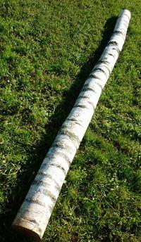 troncs de bouleau de 3m en 20cm de diametre