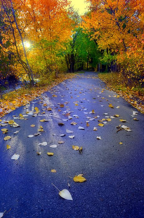 The morning light shines through the autumn leaves along the Forestbrook Walking Path in Penticton, BC Canada