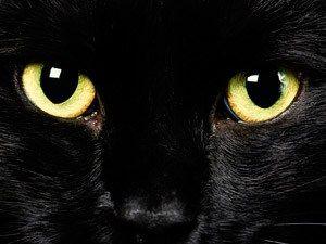 Moira el gato negro