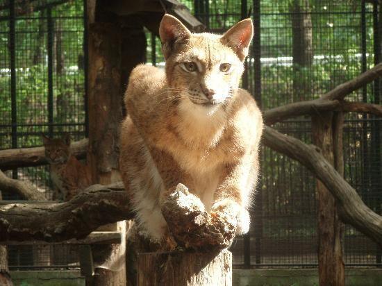 Debrecen Zoo - Hungary