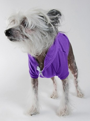 The Sebster needs this for gameday! Flex Fleece Dog Zip Hoodie | Clothing & Accessories for Pets | American ApparelFleece Dogs, Fleece Hoodie, American Apparel, Flex Fleece, Dogs Zip, Zip Hoodie, Dogs Supplies, Purple Flex, Doggie Style