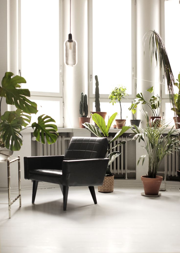 Living room jungle  Photography: Tim Kiukas Instagram: timphoto
