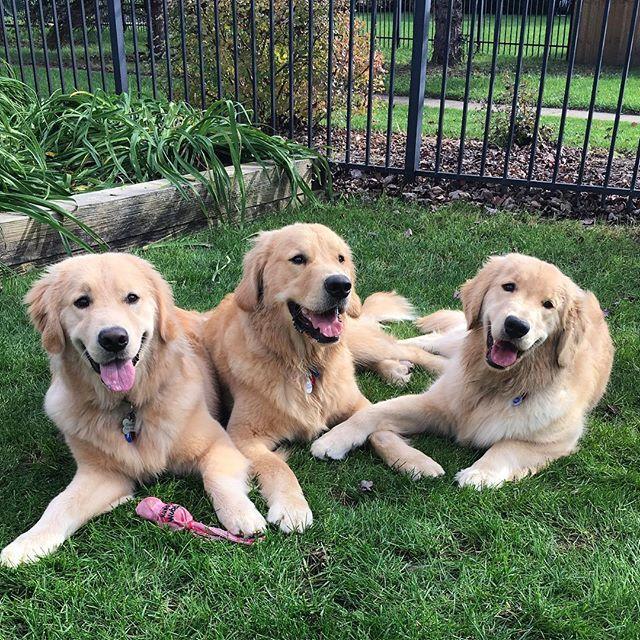Samson, Gabby and Barley ❤