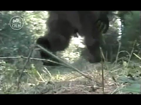 Mysterious Encounters: CALIFORNIA CREEK DEVIL (REAL BIGFOOT DOCUMENTARY)  YouTube,  Published on Apr 28, 2014.  Cryptozoologist Autumn Williams and her team of researchers investigate reported sightings of strange creatures near Klamath River, CA.  They mount expeditions, interview witnesses, perform high-tech surveillance using thermal, infrared cameras & motion activated cameras and long range calls (hopefully) to gather new evidence to support or refute the eyewitness reports.