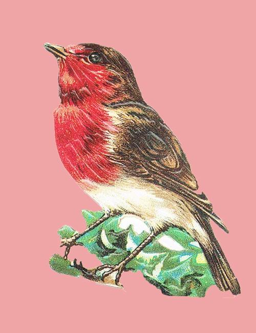 Vogel op roze voor web