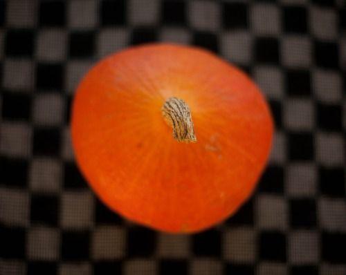 Pumkin www.rachelroad.tumblr.com