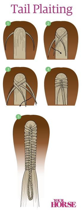 Cool info on braiding tails!
