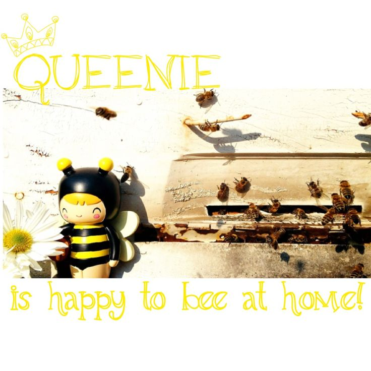 Quennie is happy to bee at home ♥