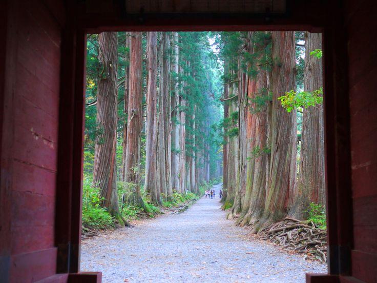 戸隠神社奥社参道杉並木 http://www.togakushi-jinja.jp/news/post-258.html