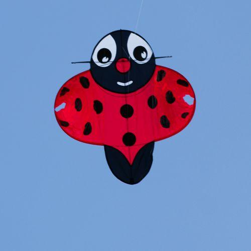 Drak Brummi - Ladybug