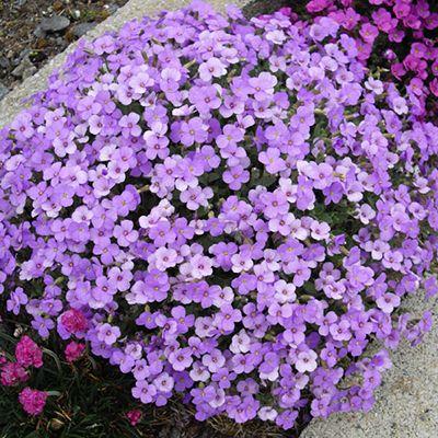 Цветы для клумбы цветущие все лето низкорослые. | Красивый Дом и Сад