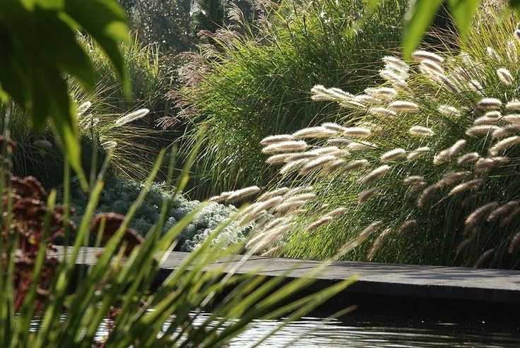 #Jardin #Sauvage #Graminee #Aurey