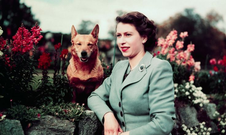 IT'S A DOGS LIFE: Queen's corgis are fed fillet steaks and chicken breast cooked by a chef and covered with gravy poured by the monarch herself