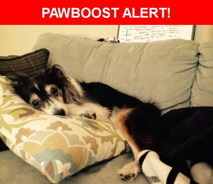 Please spread the word! Stellla was last seen in Battle Ground, WA 98604.    Nearest Address: 17606 Northeast 77th Avenue, Battle Ground, WA, United States