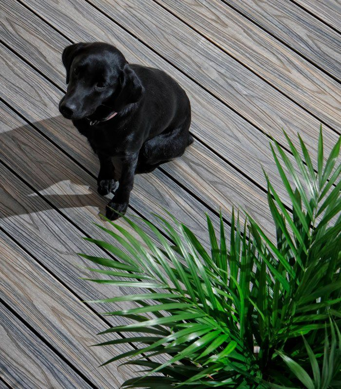 Dog on brown decking Plastic decking, Composite decking