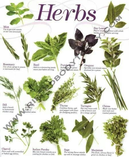 """In general use, herbs are any plants used for flavoring, food, medicine, or perfume. Culinary use typically distinguishes herbs as referring to the leafy green parts of a plant (either fresh or dried), from a """"spice"""", a product from another part of the plant (usually dried), including seeds, berries, bark, roots and fruits.In botanical English the word """"herb"""" is also used as a synonym of """"herbaceous plant"""".Herbs have a variety of uses including culinary, medicinal, and in some cases…"""