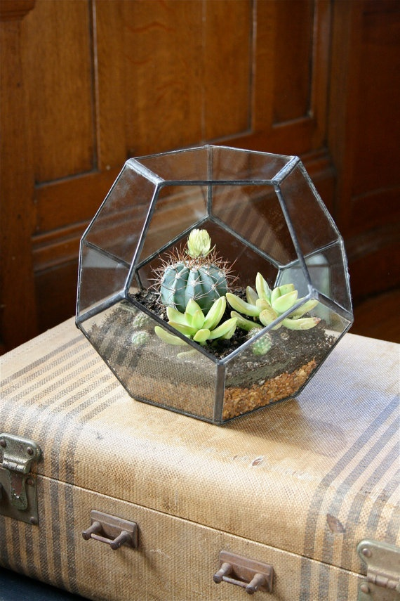 Items Similar To Tabletop Terrarium   Large Dodecahedron On Etsy