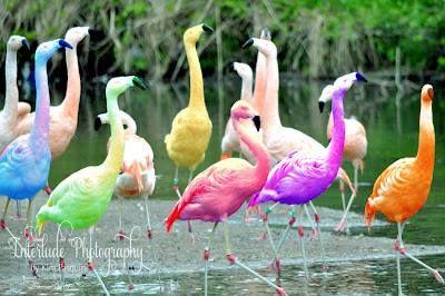 Flamingos | Over the Rainbow | Pinterest | Flamingos