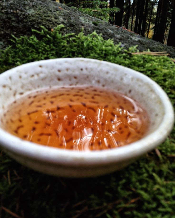 #naturelovers #klubkocajuje #teatime #moss #tealovers #teaaddict #tieguanyin #forest Piknik v lese na nejvyšším kopci Kněží hora!🌿🍃🌲🌳☕️
